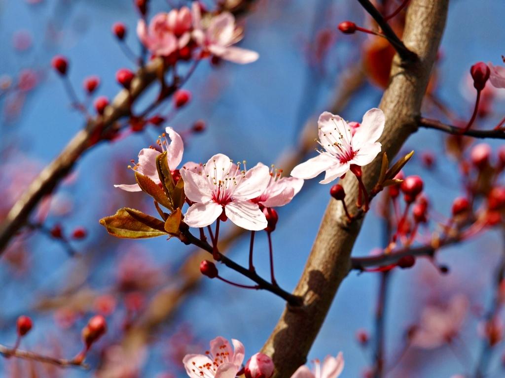 Lovely spring- 01.04.14