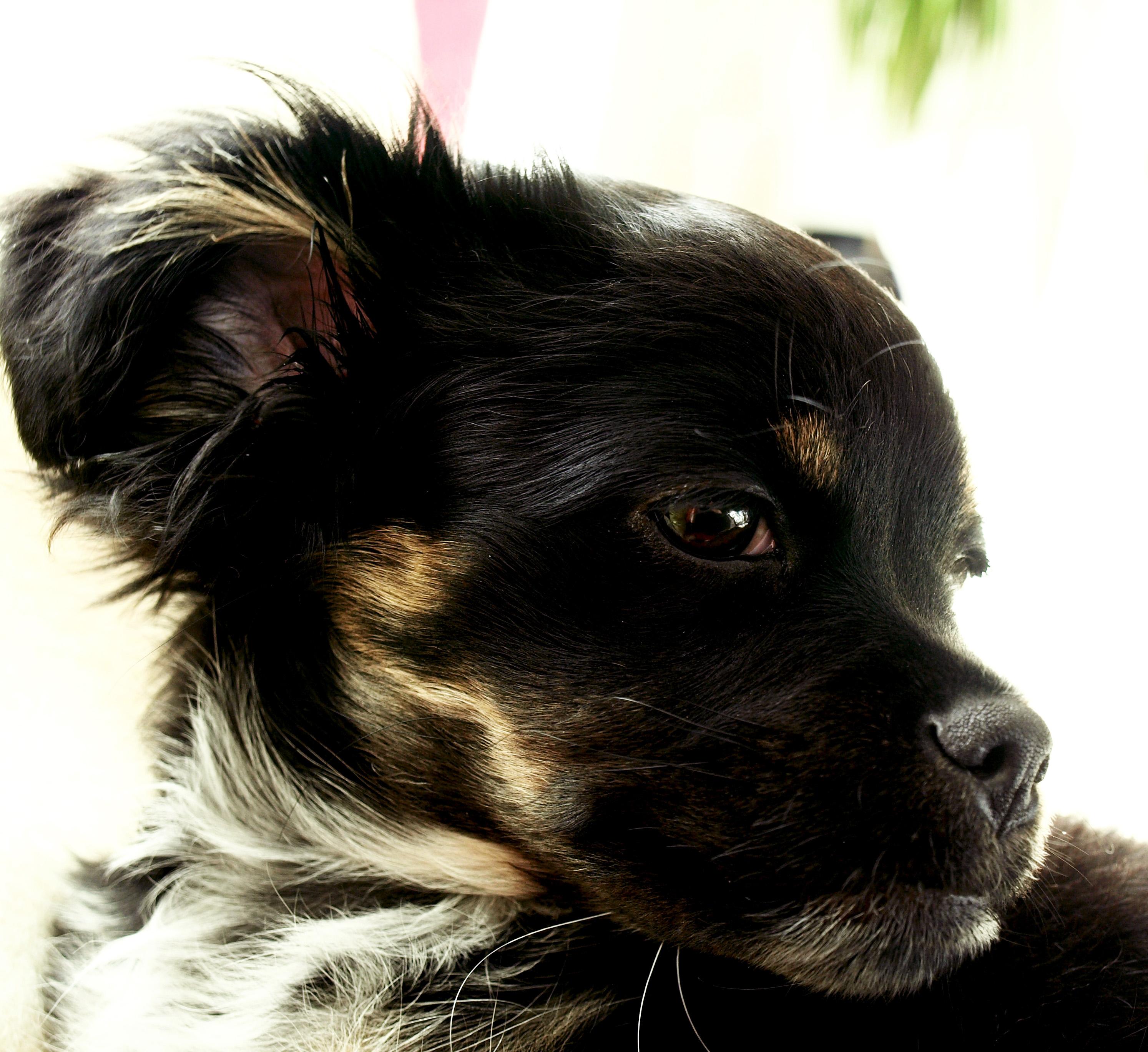 My sweet Molly. 09.04.14